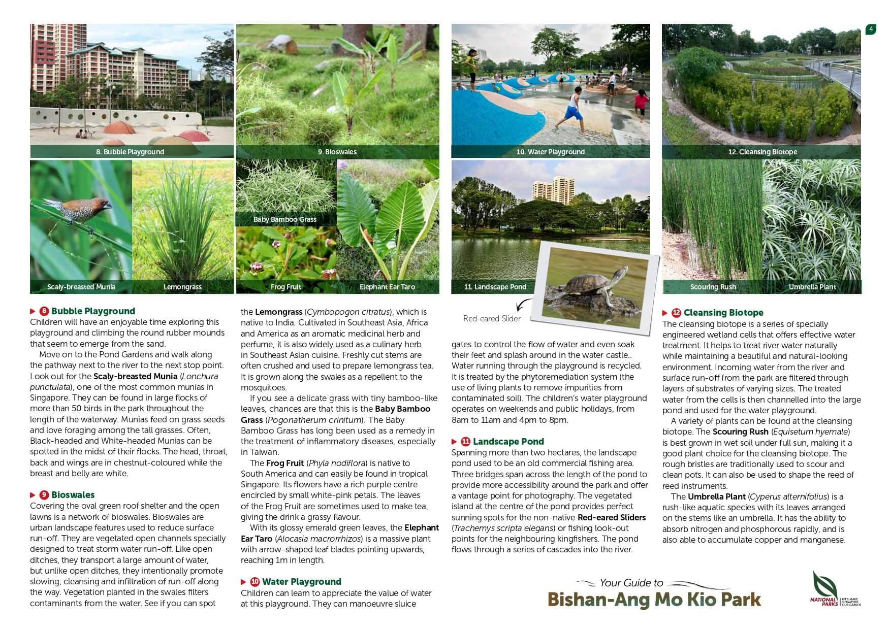 bishan amk park page 4