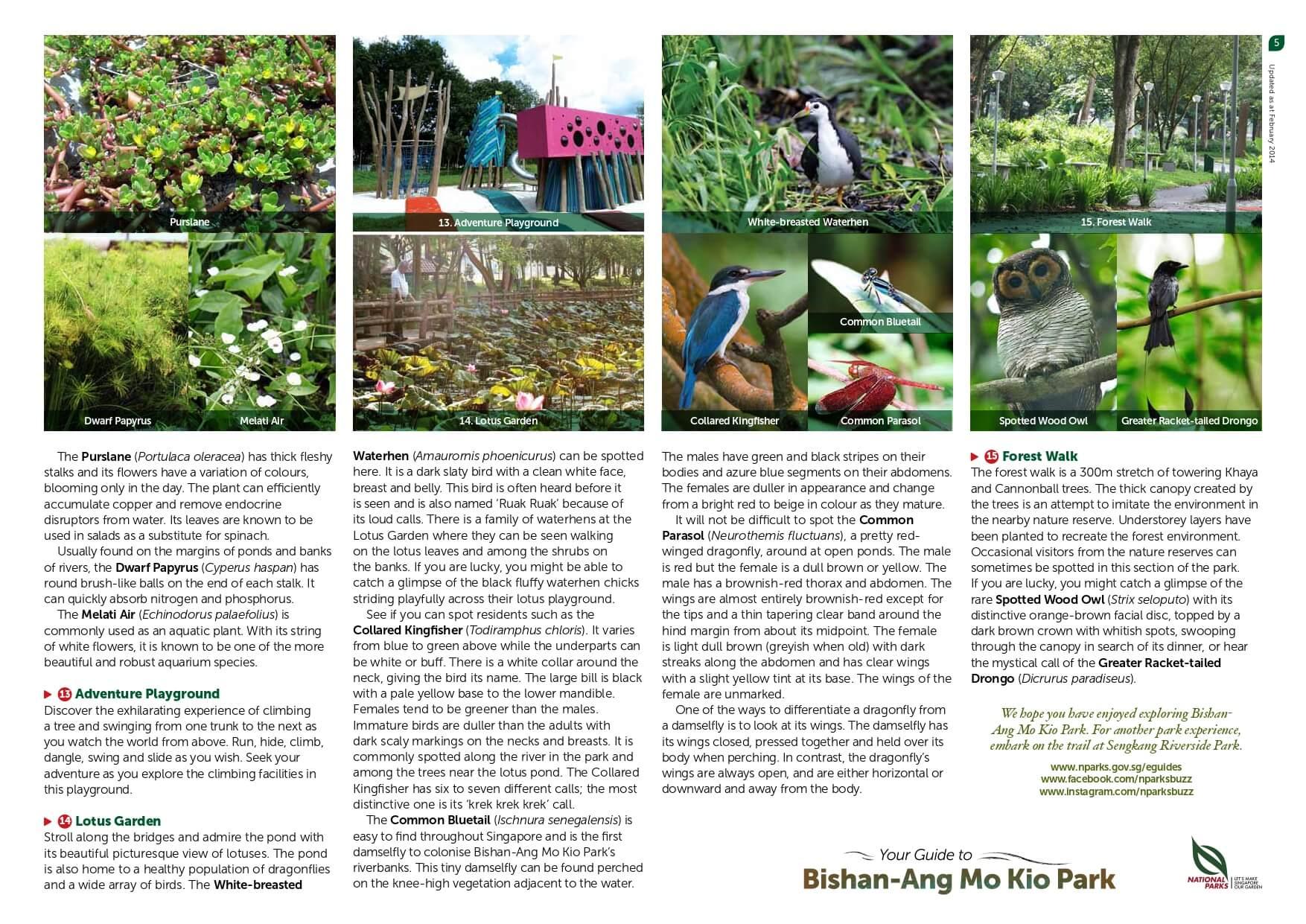 bishan amk park page 5